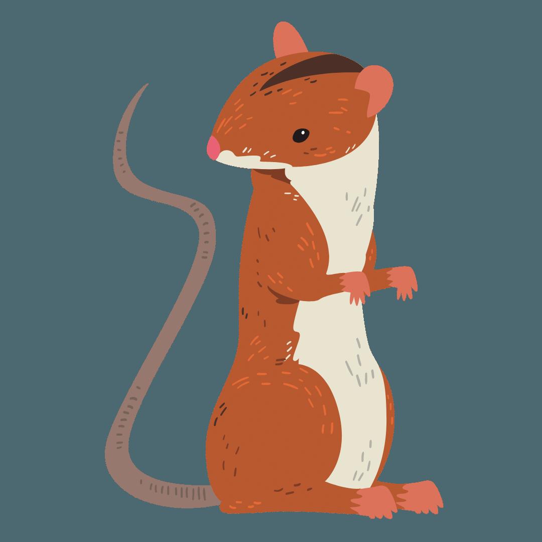 Rat Removal Camperdown